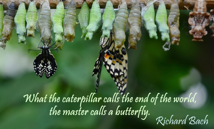 caterpillar_butterfly