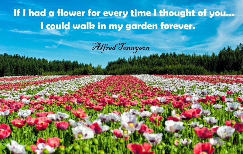 garden_forever
